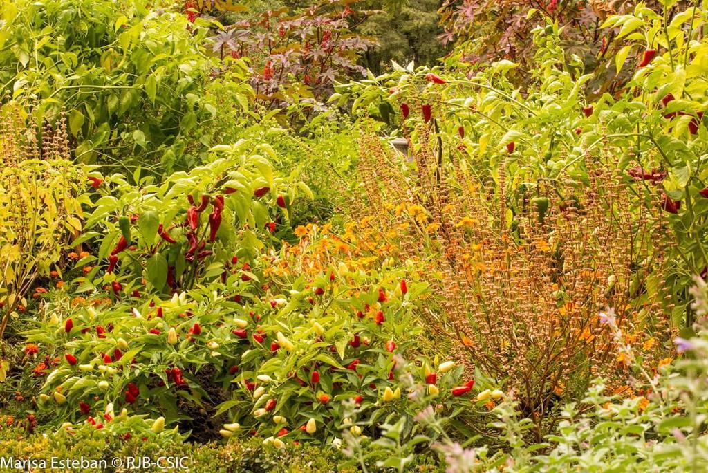 Real jardin botanico rjbotanico twitter for Biblioteca digital real jardin botanico