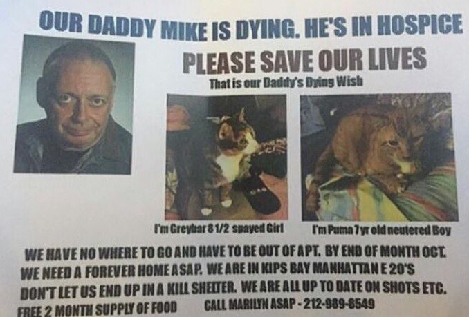 Can we grant this man his dying wish and find a home for his babies? Time is running out
