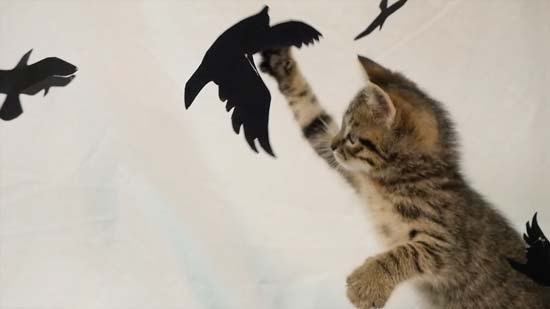 Kittens purrfectly take center stage in horror movie re-enactments