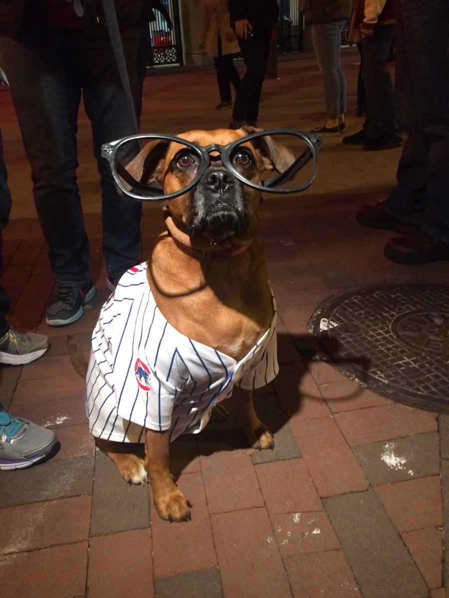 Wrigleyville has gone to the dogs