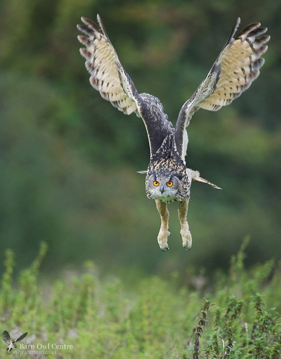 """Barn Owl Centre on Twitter: """"Here's an example of the type ..."""