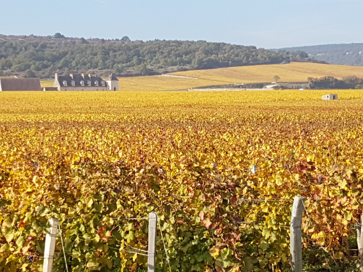 Just stunning. Clos Vougeot at its most golden. https://t.co/MtCZVxqRY0