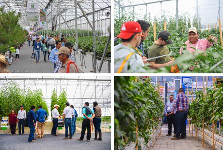 Serious room for growth for protected crops in Mexico http://www.hortidaily.com/article/29875/Serious-room-for-growth-for-protected-crops-in-Mexico…