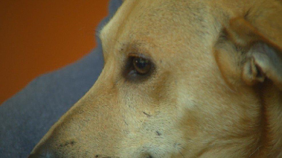 Prison dog-training program expanding at Maryland prison