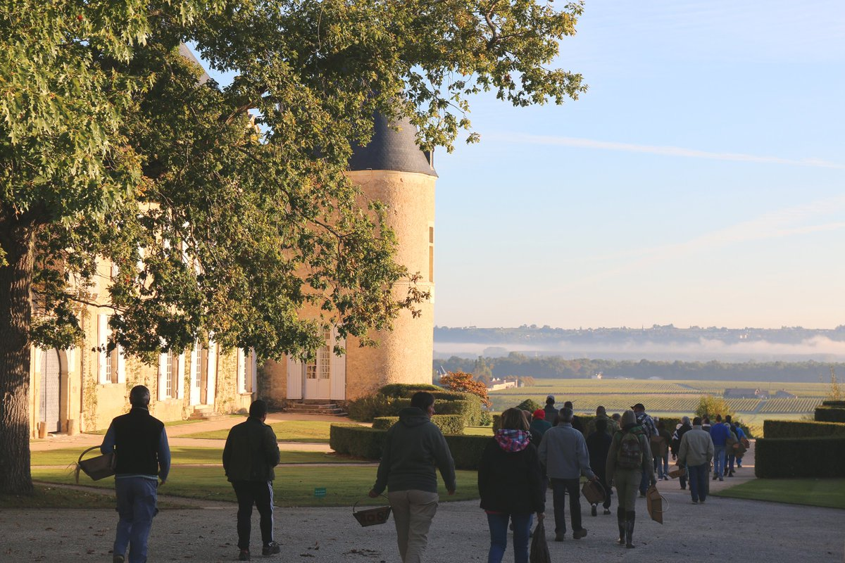 Harvest scenes, with the traditional departure of our 180 pickers, divided into four groups. #Yquem https://t.co/687BW68m5Y