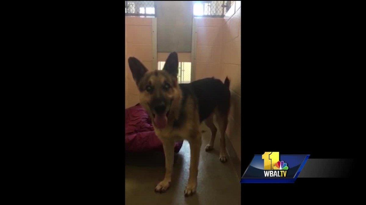 Anne Arundel animal control advocates upset over treatment of dog