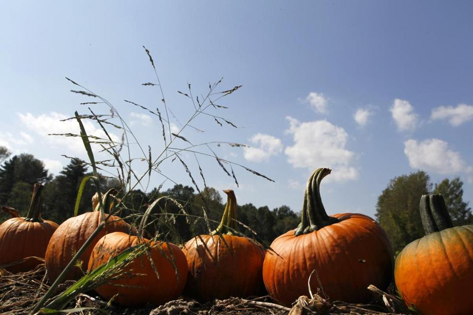 Autumn rituals can hold deeper meaning than pumpkins and cider