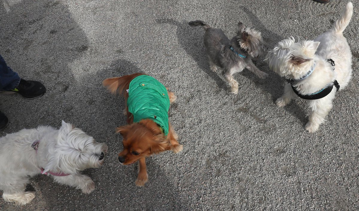 Dogs get a run at new South Boston park for pups