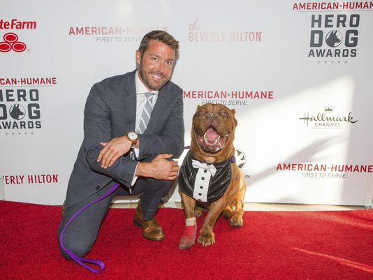 Abused French mastiff Hooch is Hero Dog of the Year