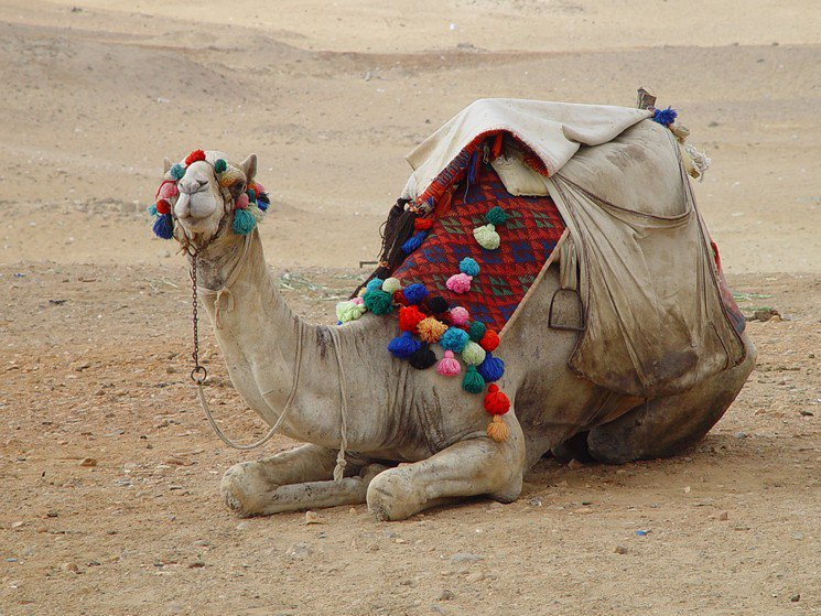 The Five Best Things to Do in Houston This Weekend: Camels and Creepy Clowns