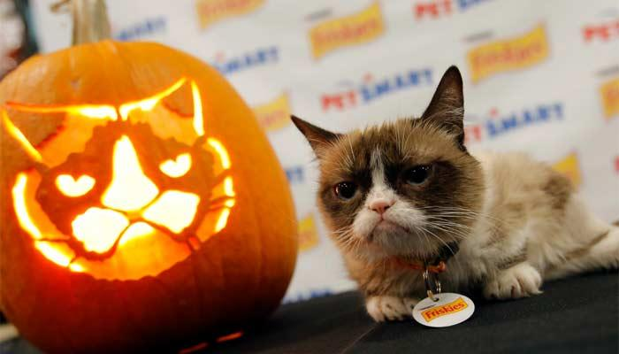 Keep your pets safe and happy this Halloween»
