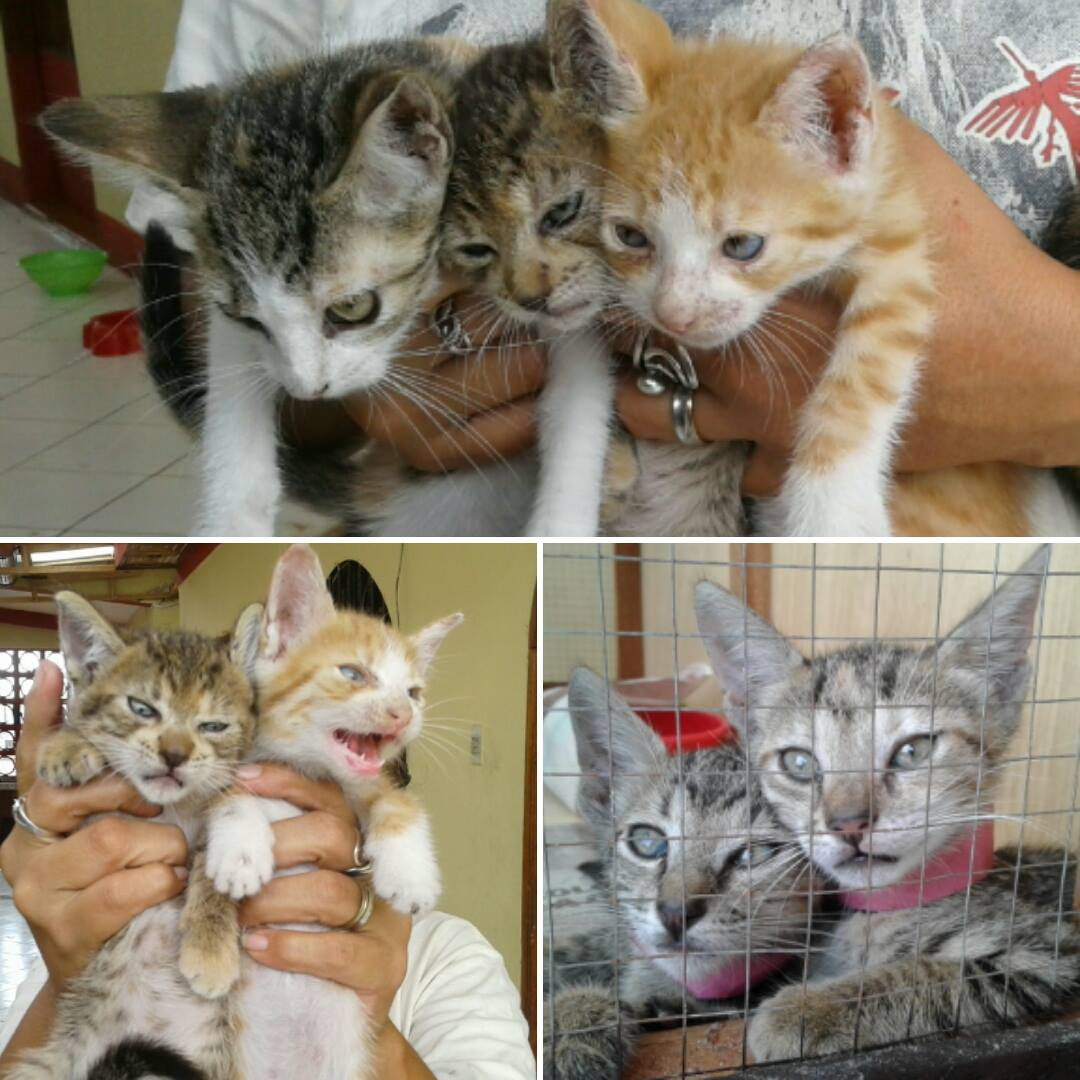 Help @AmazonCARESsave these abandoned litters. They are dependent on your support! https://t.co/tPCV1nsFS0 https://t.co/uOqlJ27lLC