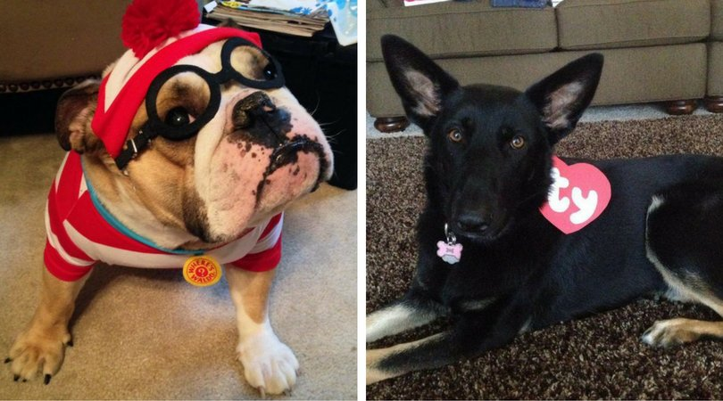 The World Doesn\'t Deserve These 20 Big Dog Costumes