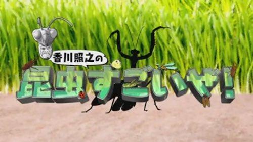 昆虫すごいぜ 見逃し配信