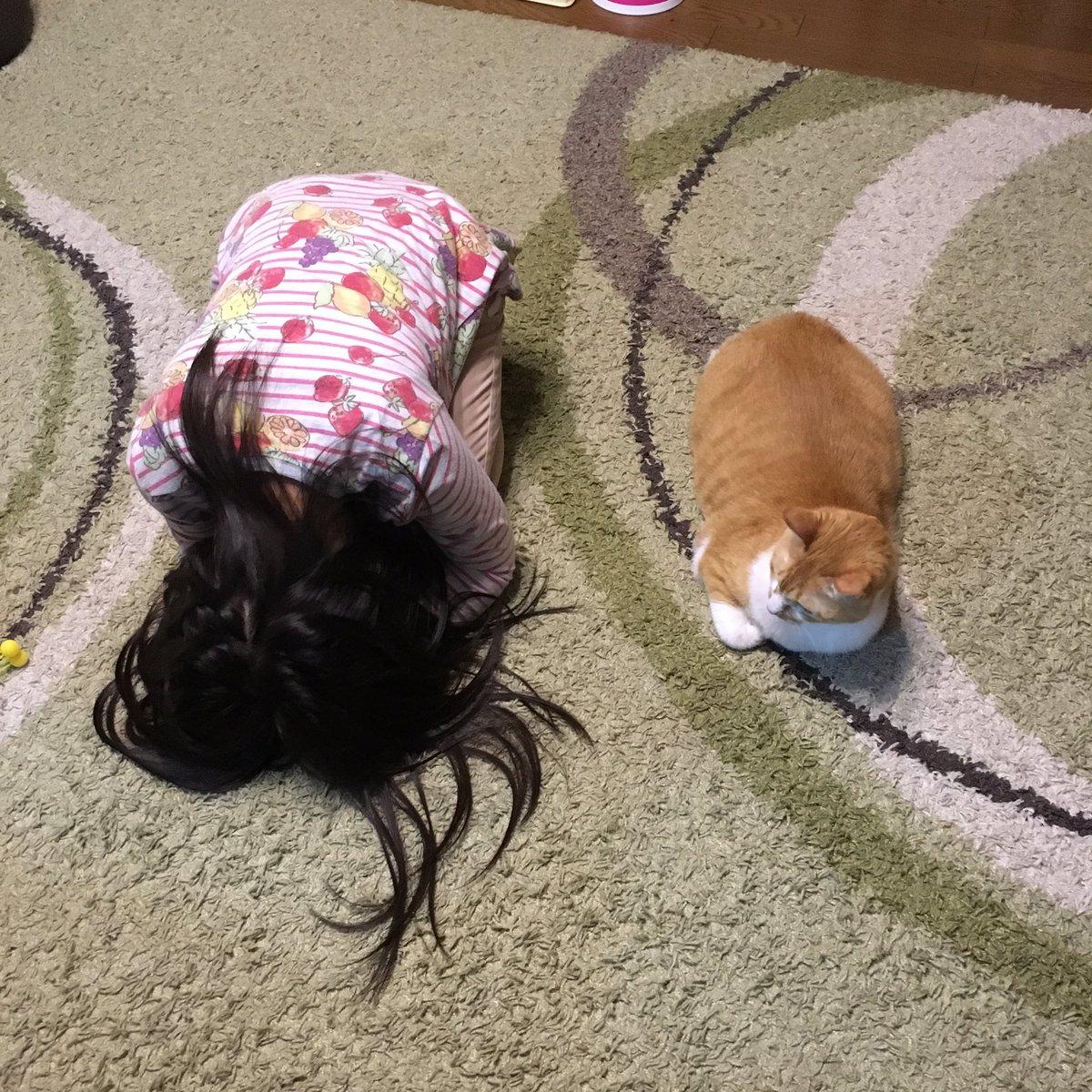 「猫ちゃんかわいいポーズしてる!!私もまねして可愛くなろーっと!!」と叫んで猫の横にうずくまる7歳娘と、えっ何なのこいつ…的にドン引きする猫 pic.twitter.com/6MtQXQCxnS
