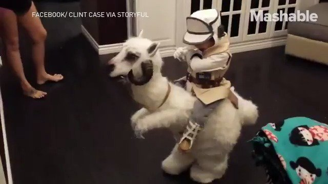 RT @mashable: This little 'Star Wars' fan might have the best costume ever https://t.co/O1affMSrKp