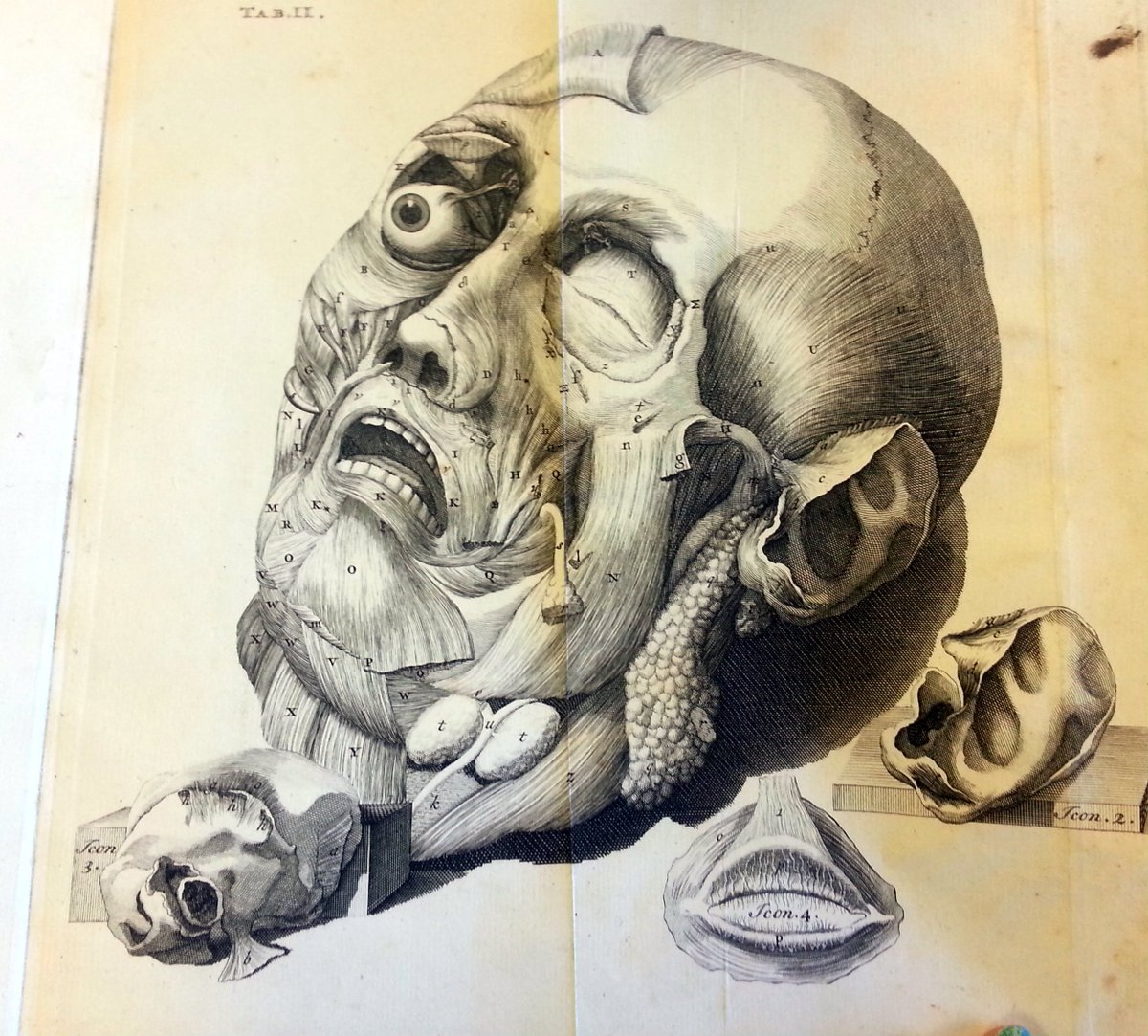 Umich Spcoll On Twitter How To Teach Anatomy In 1743 Give