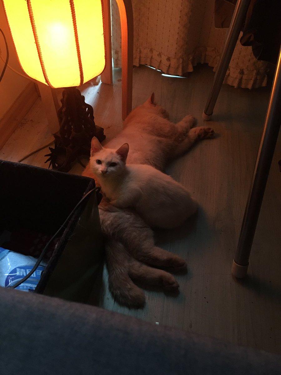 我的猫捡了一只小猫 https://t.co/1QxwqLhhwx