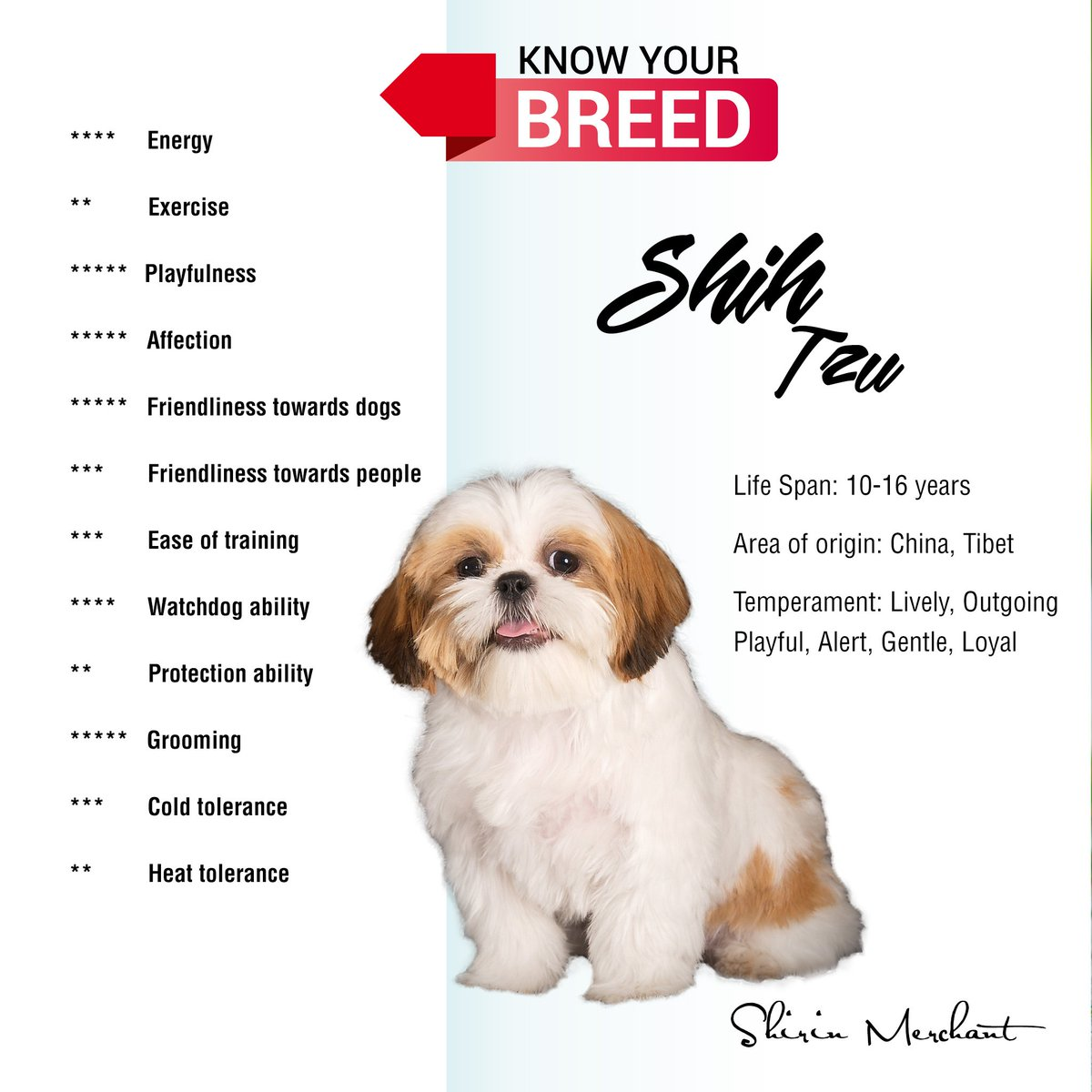shih tzu personality carolina dog rescue takvim kalender hd 8765