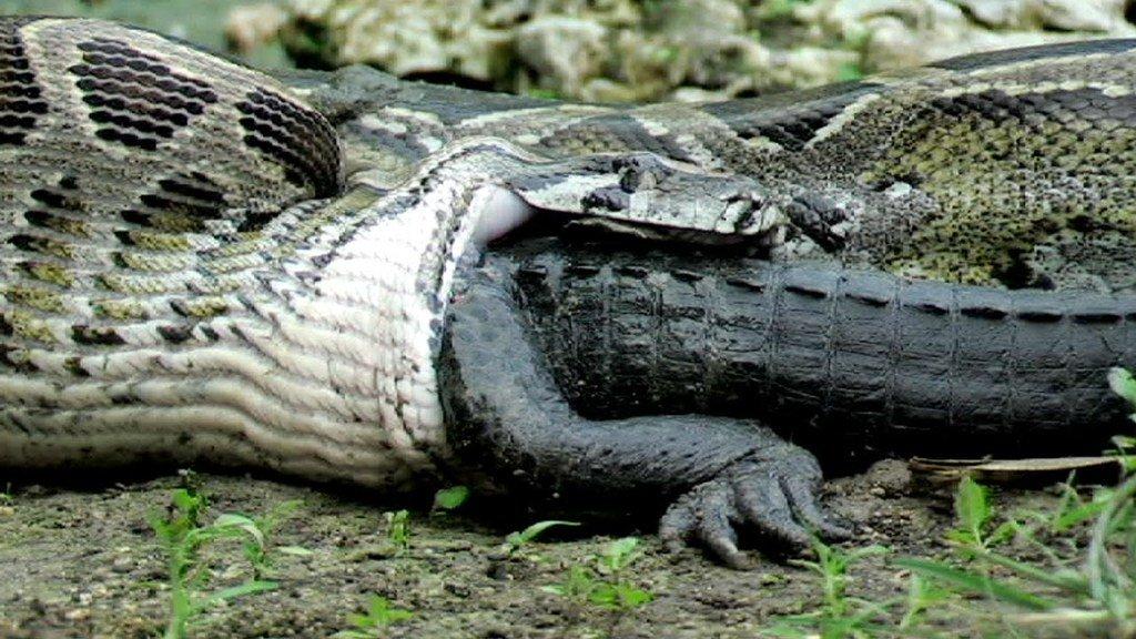 картинки змей которые едят людей философ