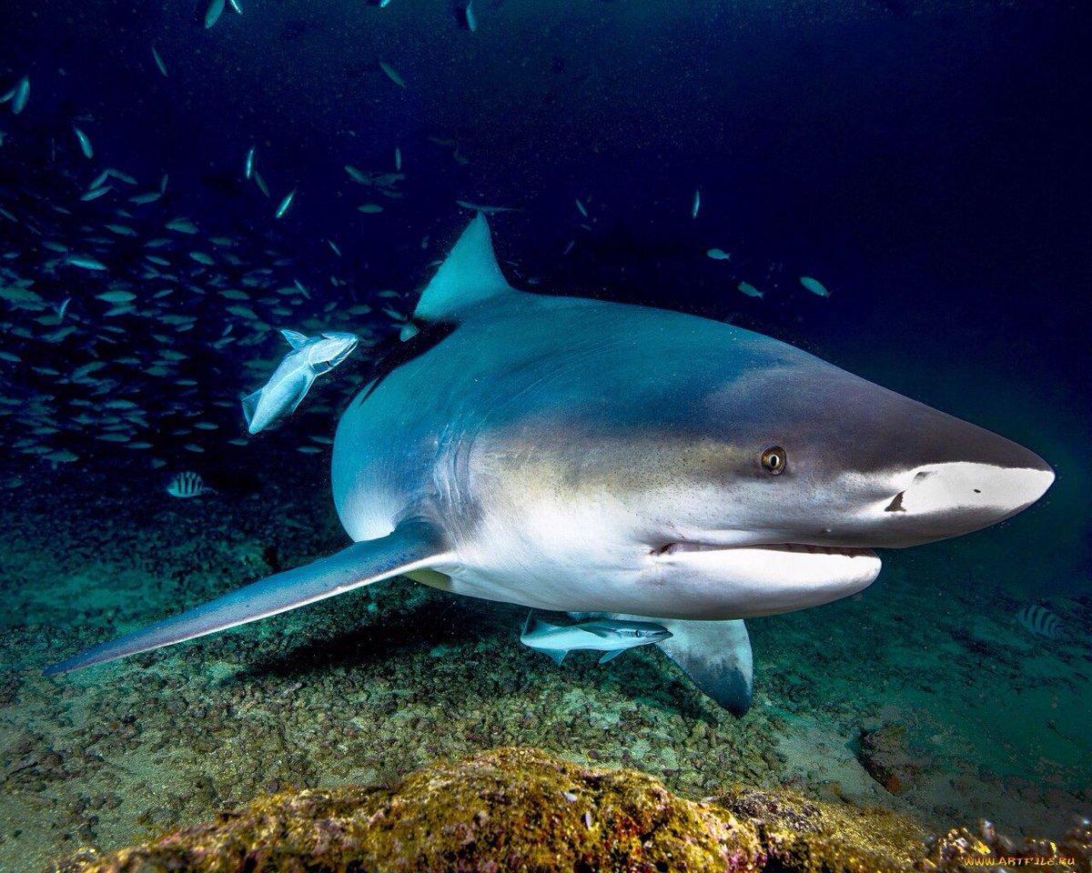 фотографии про акулу быстро