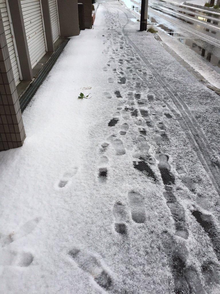 【悲報】 本日、札幌に雪が降りました。