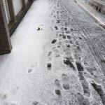 まじかよ札幌はもう雪が降ったらしい!
