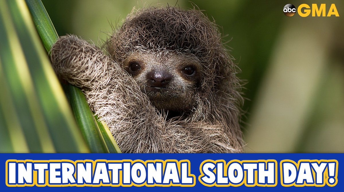 Happy #InternationalSlothDay! https://t.co/8CEoFfFzYZ