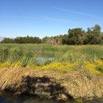 Orange County Water