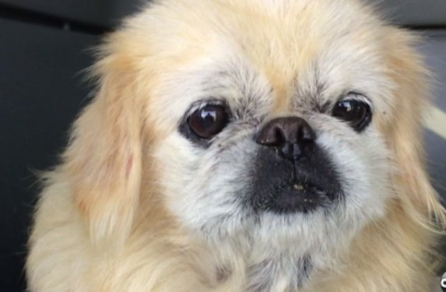 Dog Lost For A Decade Found In Fort Funston, Identified By Microchip
