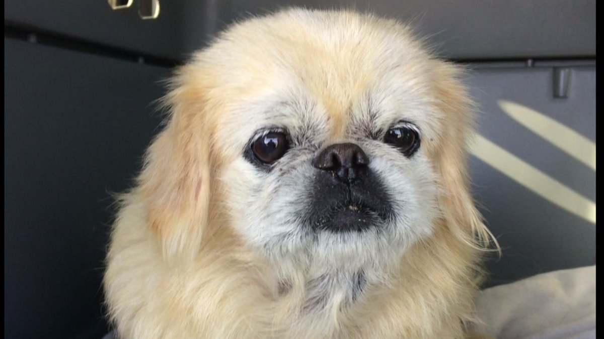 Good Samaritan finds dog missing 10 years