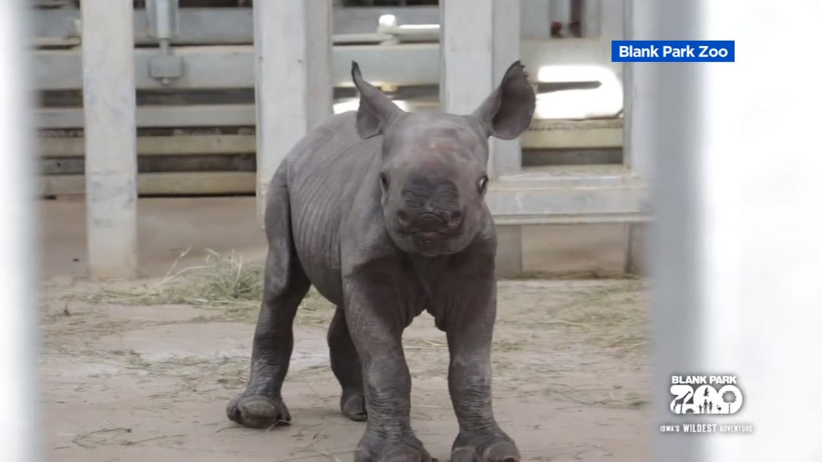 Zoo welcomes adorable baby rhino