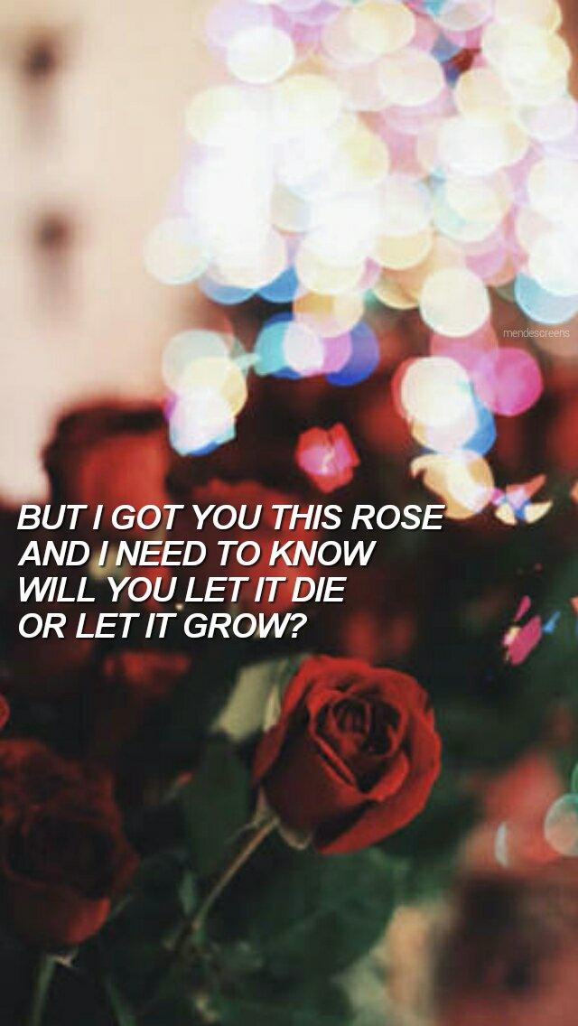 Shawn Mendes Lockscreen Roses