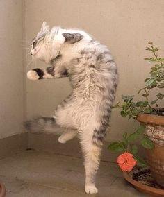 ロマサガの戦闘で自分の行動が決まった状態の猫 pic.twitter.com/KmhlSjYDXr