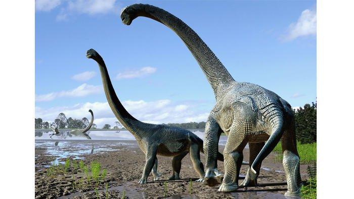 Scientists unearth new species of titanosaur that roamed Australia 95 million years ago