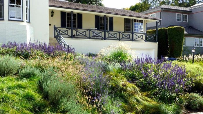 They replaced the lawn with a gorgeous drought-tolerant meadow that doesn't need mowing