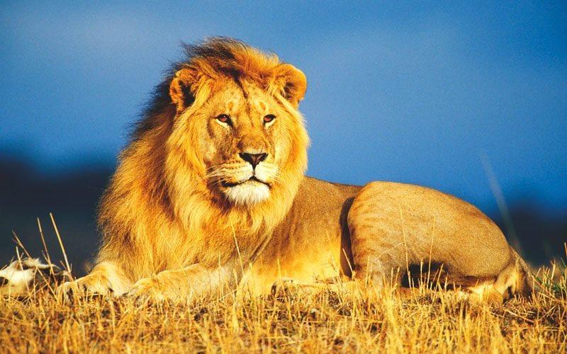 Como alguien puede matar un león!!! https://t.co/6WCvGNNoda