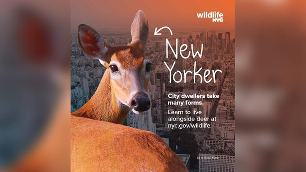 City launches campaign to help New Yorkers live with wild animals