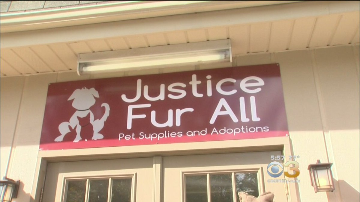 New Pet Shop Focuses On Mission To Help Abused Animals. @VittoriaWoodill Reports