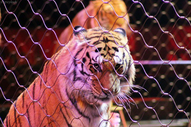 NYC May Ban Use Of Wild Animals For Entertainment