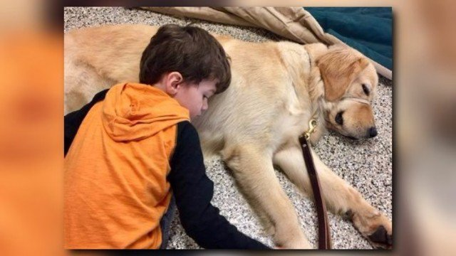 See amazing moment when boy meets his service dog