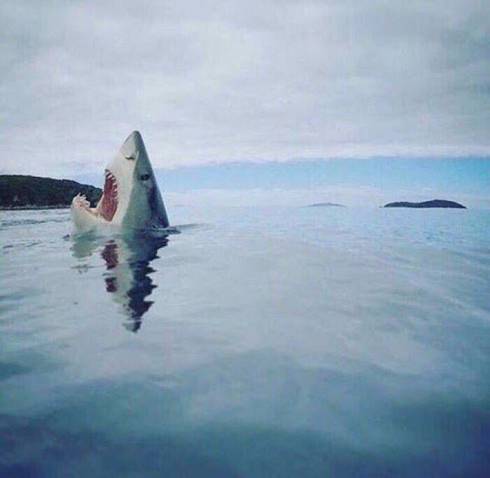 Rare image of a shark stepping on a Lego. —@sonikkua