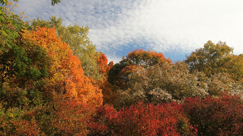 Fall foliage near Boston is peaking over the next few days