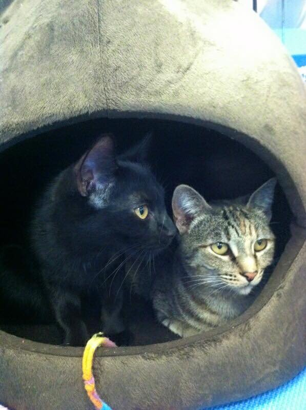 Meet today's Pets of the Day, Jupiter and Solana!