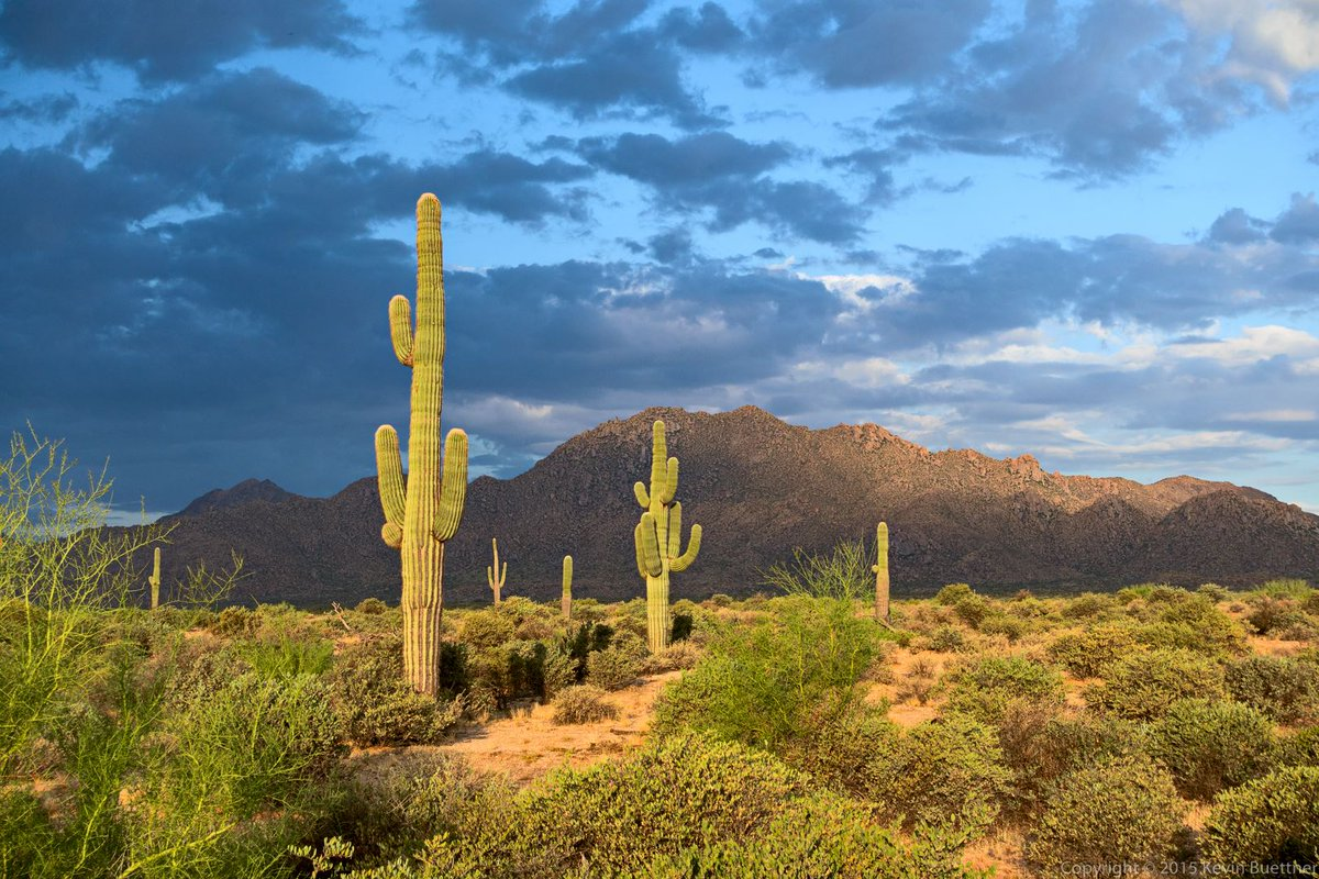 Park spotlight: Discover desert life on all-level trails in McDowell Mountain Regional Park