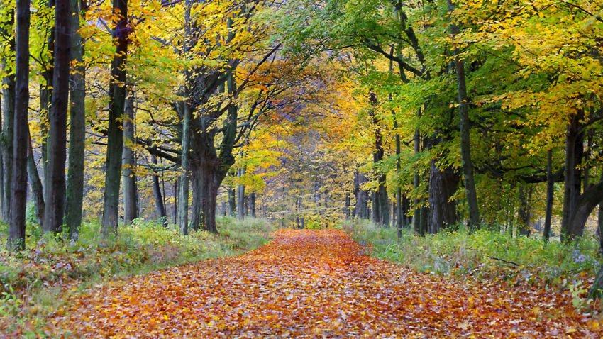 8 places to see fall foliage in Massachusetts