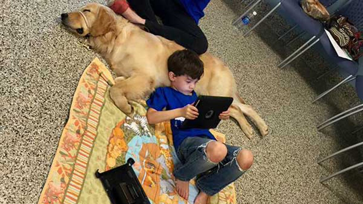 Boy with autism meets new service dog, bonds instantly