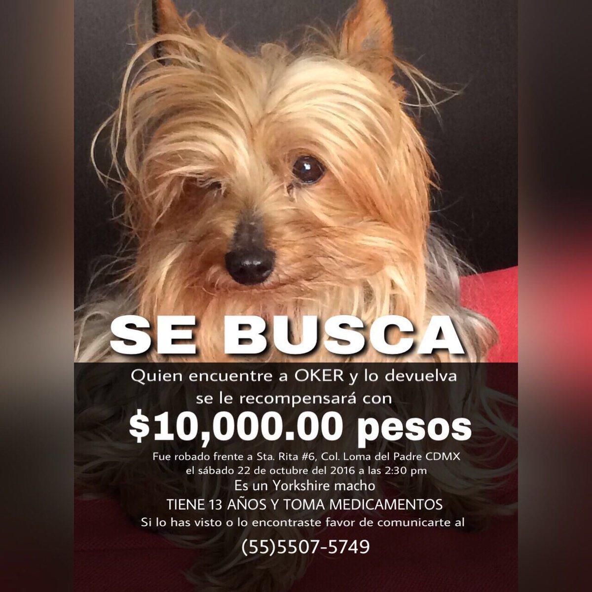 Queridos seguidores, por favor pueden dar RT a este tuit? Es un perro robado hoy :( Muchas gracias!! Saludos a todos https://t.co/YSkNmjHogz