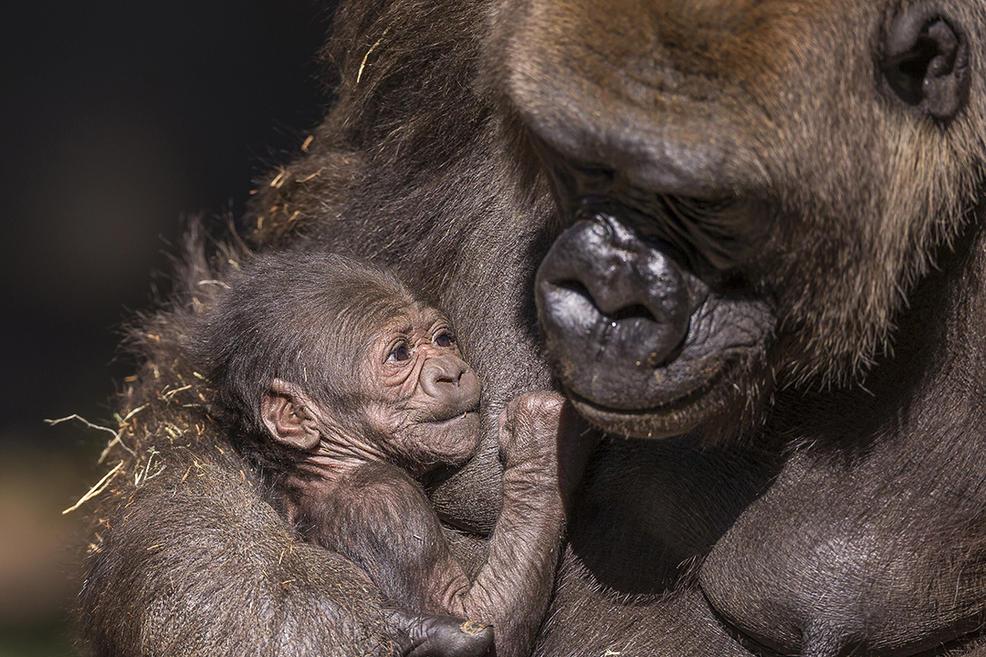 Adorable zoo babies around the world --->