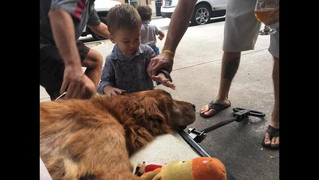 Strangers come together to give dying dog one last special day around town